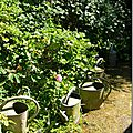 Windows-Live-Writer/jardin-charme_12604/DSCN0554_thumb