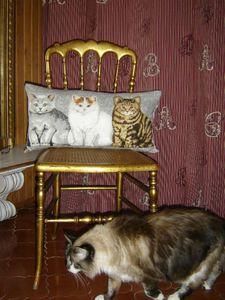 coussin chat et pépette