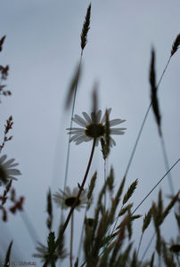 20090524_14h21_Missillac