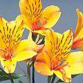 Fonds d'écran florales
