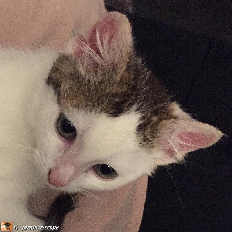 Jeune chaton - Fripouille